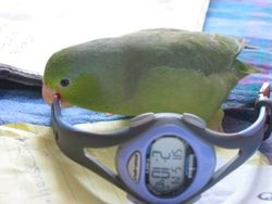 Running watch and parrotlet